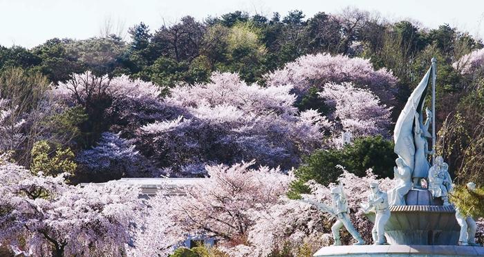 hidden cherry blossoms
