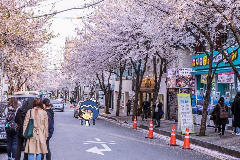 mapogu cherry blossoms, hapjeong