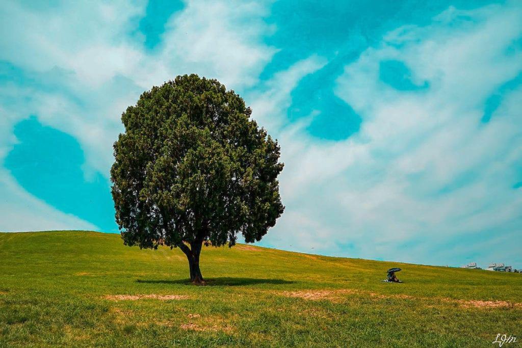 na hollo tree